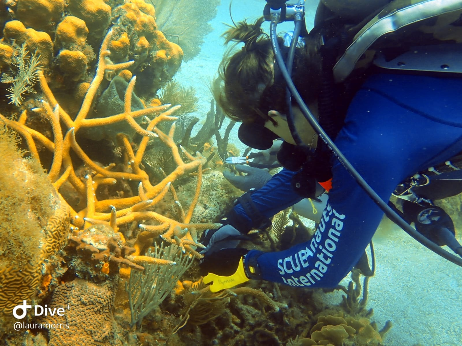 Marcus collects coral to be transplanted.