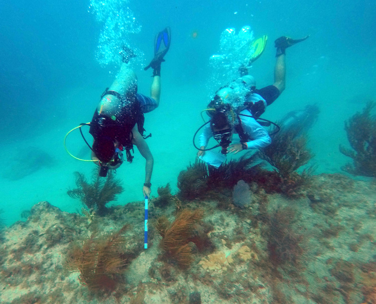 We measure and record coral and coral disease sizes.