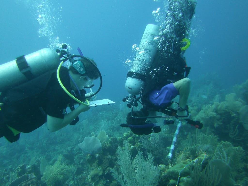 Coral Disease in Belize