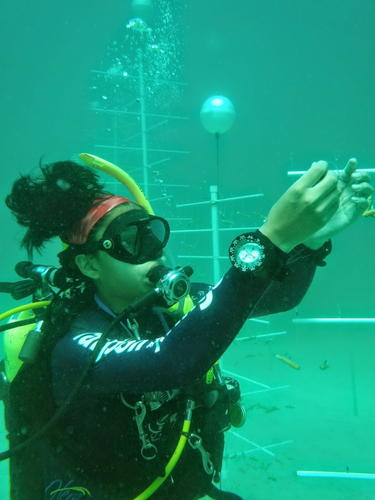 July 2014 Coral Nursery and Transplant Dive Missions