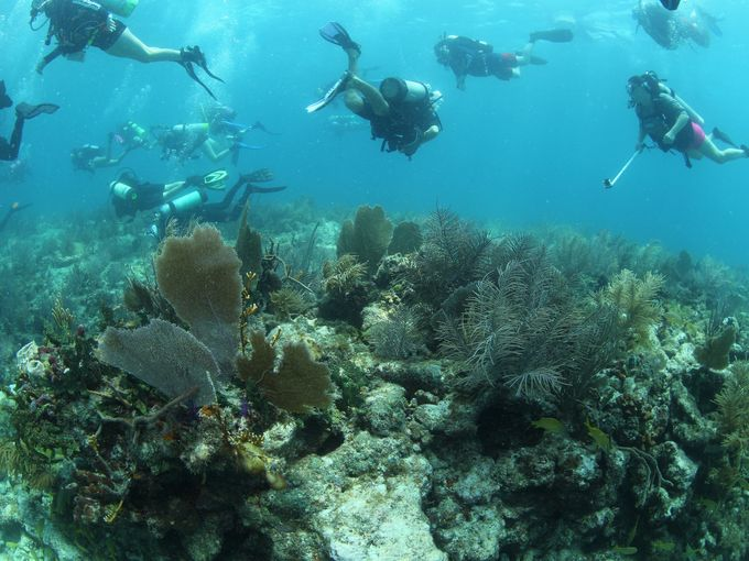 In the News: Kids, wounded vets join to restore coral in the Keys