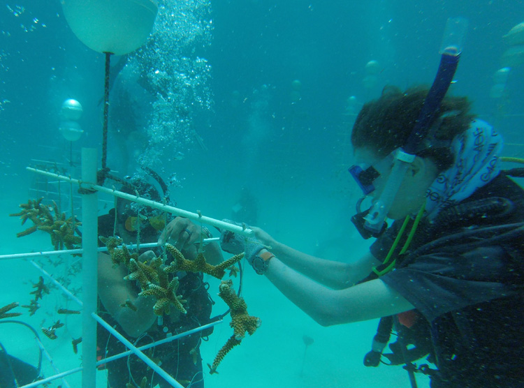 Naut-in-Training Explains Coral Outplanting