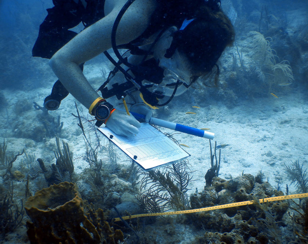 diver collecting data on palythoa