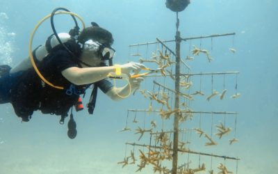 Nauts Restore Reefs, Conduct Coral Research in Florida Keys