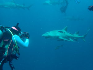 teen diver with shark