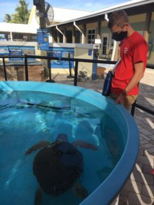 sea turtle hospital diving