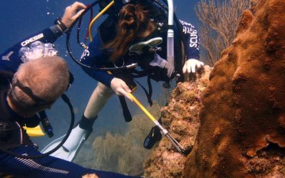 NC Nauts Spring Break, New Partnerships, Lionfish Removal, and Coral Restoration in Aruba