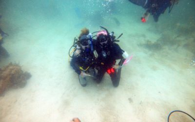 Same Coral, Different Strategy – My Time With Reef Renewal