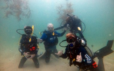 Coral Restoration With Help From Yellowtail Snapper